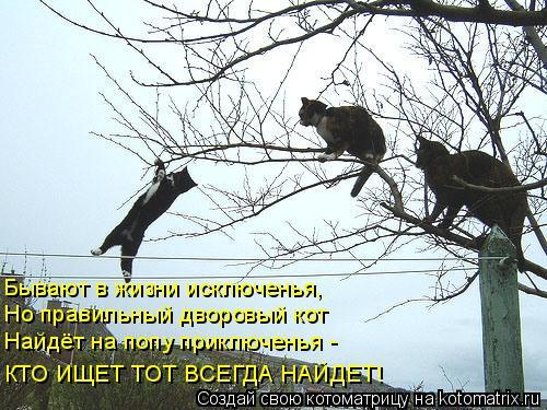 Котоматрица: Бывают в жизни исключенья, Но правильный дворовый кот Найдёт на попу приключенья - КТО ИЩЕТ ТОТ ВСЕГДА НАЙДЕТ!