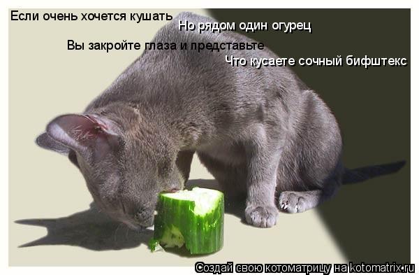 Котоматрица: Если очень хочется кушать Вы закройте глаза и представьте Но рядом один огурец Что кусаете сочный бифштекс