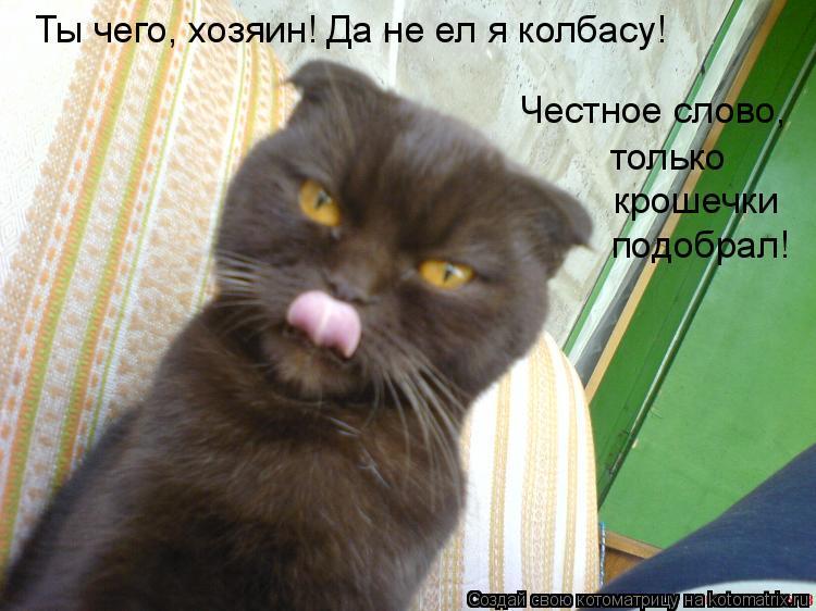 Котоматрица: Ты чего, хозяин! Да не ел я колбасу!  Честное слово,  только  крошечки  подобрал!