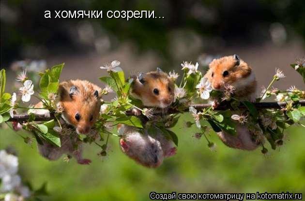 Котоматрица: а хомячки созрели...