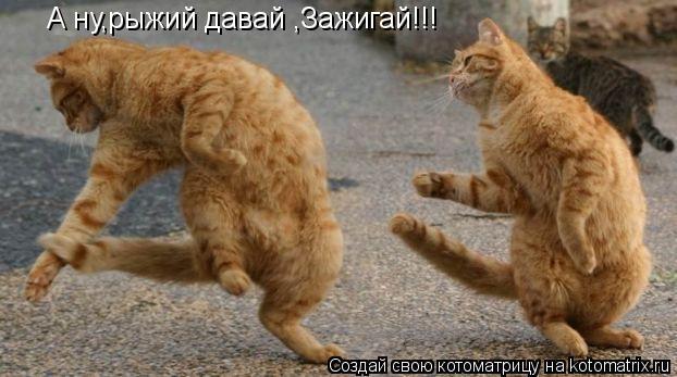 Котоматрица: А ну,рыжий давай ,Зажигай!!!