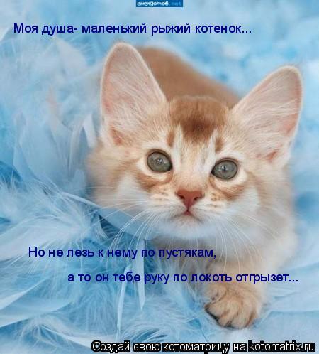 Котоматрица: Моя душа- маленький рыжий котенок... Но не лезь к нему по пустякам, а то он тебе руку по локоть отгрызет...