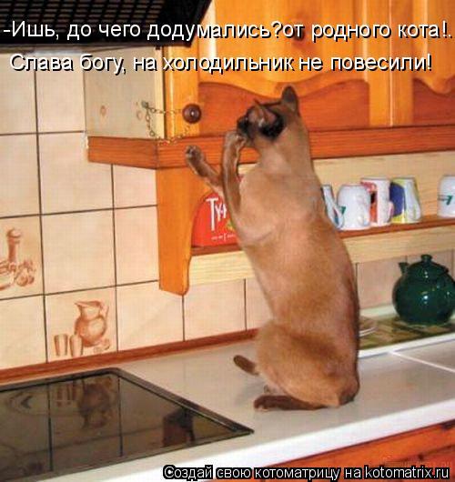 Котоматрица: -Ишь, до чего додумались?от родного кота!... Слава богу, на холодильник не повесили!