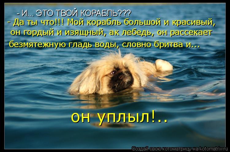 Котоматрица: - И... ЭТО ТВОЙ КОРАБЛЬ??? - Да ты что!!! Мой корабль большой и красивый,  безмятежную гладь воды, словно бритва и... он гордый и изящный, ак лебедь,