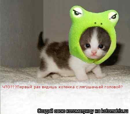 Котоматрица: Тааак!!!Интересно, какая голова мне больше идет!!!??? ЧТО???Первый раз видишь котенка с лягушачьей головой?