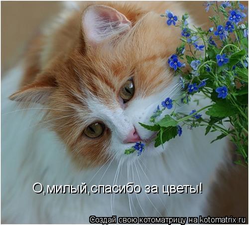 Котоматрица: О,милый,спасибо за цветы!