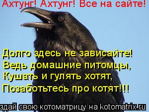Котоматрица: Ахтунг! Ахтунг! Все на сайте! Долго здесь не зависайте! Ведь домашние питомцы, Кушать и гулять хотят, Позаботьтесь про котят!!!
