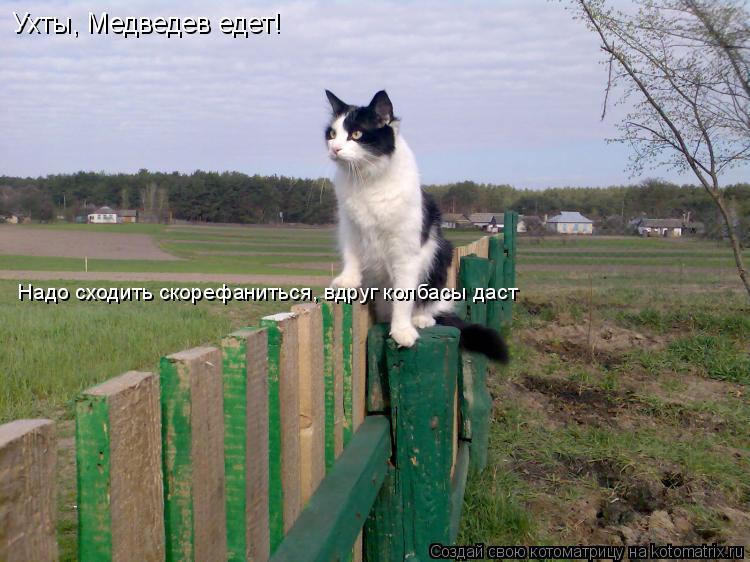 Котоматрица: Ухты, Медведев едет! Надо сходить скорефаниться, вдруг колбасы даст