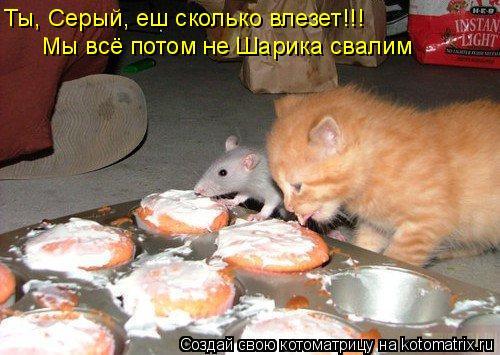 Котоматрица: Ты, Серый, еш сколько влезет!!! Мы всё потом не Шарика свалим