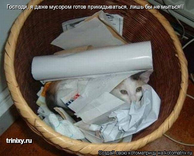 Котоматрица: Господи, я даже мусором готов прикидываться, лишь бы не мыться!!