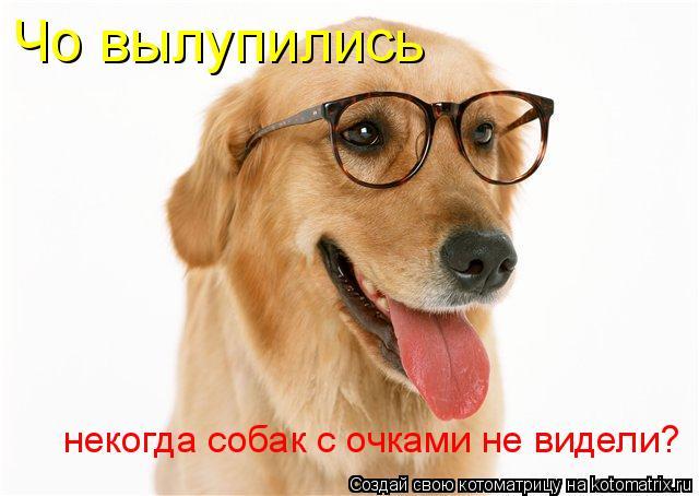 Котоматрица: Чо вылупились некогда собак с очками не видели?