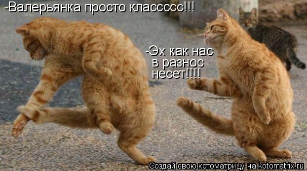 Котоматрица: -Валерьянка просто классссс!!! в разнос -Эх как нас  несет!!!!