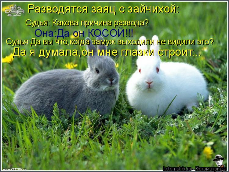 Котоматрица: Разводятся заяц с зайчихой: Да я думала,он мне глазки строит... Судья:Да вы что,когда замуж выходили не видили это? Она:Да он КОСОЙ!!! Судья: Как