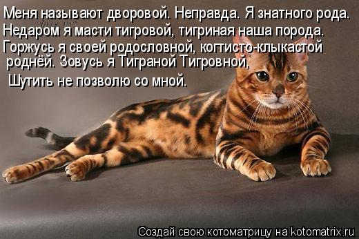 Котоматрица: Меня называют дворовой. Неправда. Я знатного рода. Недаром я масти тигровой, тигриная наша порода. Горжусь я своей родословной, когтисто-клы