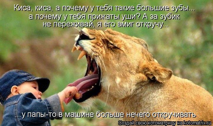 Котоматрица: Киса, киса, а почему у тебя такие большие зубы... а почему у тебя прижаты уши? А за зубик  не переживай, я его вмиг откручу... ...у папы-то в машине