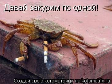 Котоматрица: Давай закурим по одной!
