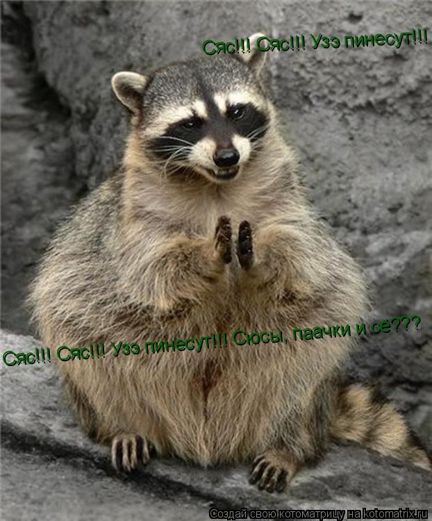 Котоматрица: Сяс!!! Сяс!!! Узэ пинесут!!! Сюсы, паачки и сё??? Сяс!!! Сяс!!! Узэ пинесут!!! Сюсы, паачки и сё???