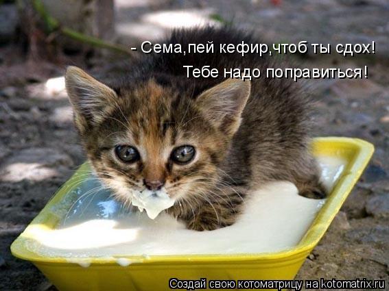 Котоматрица: - Сема,пей кефир,чтоб ты сдох! Тебе надо поправиться!
