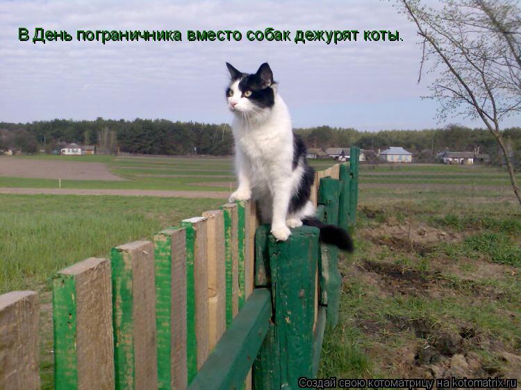 Котоматрица: В День пограничника вместо собак дежурят коты.