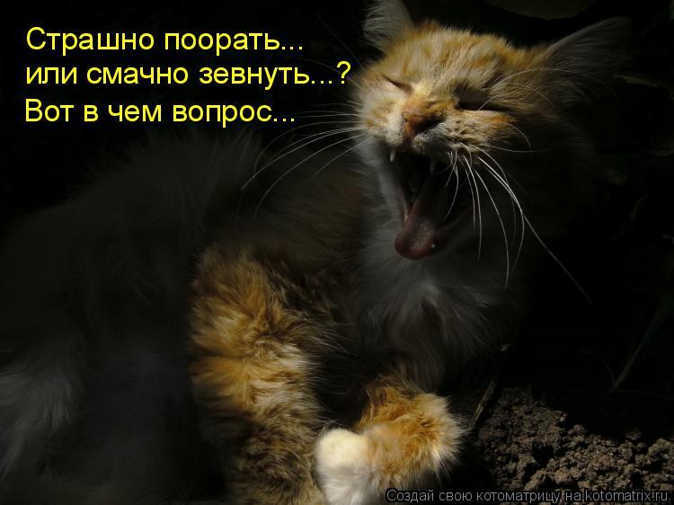 Котоматрица: Страшно поорать... или смачно зевнуть...? Вот в чем вопрос...