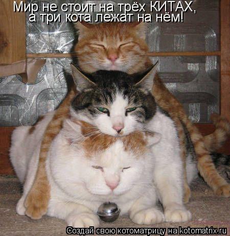 Котоматрица: Мир не стоит на трёх КИТАХ, а три кота лежат на нём!