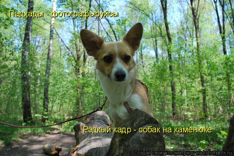 Котоматрица: Падхады - фотографыруйсы Рэдкый кадр - собак на каменюке