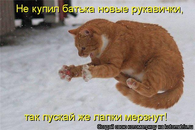 Котоматрица: Не купил батька новые рукавички,  так пускай же лапки мерзнут!