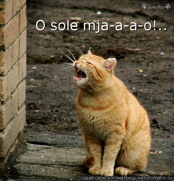Котоматрица: O sole mja-a-a-o!..