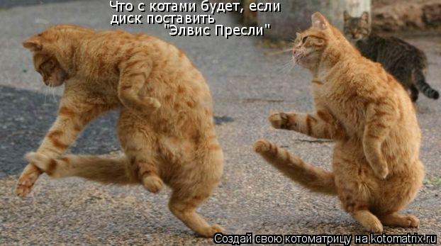 """Котоматрица: Что с котами будет, если  диск поставить  """"Элвис Пресли"""""""