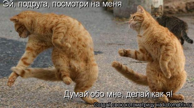 Котоматрица: Эй, подруга, посмотри на меня Думай обо мне, делай как я!