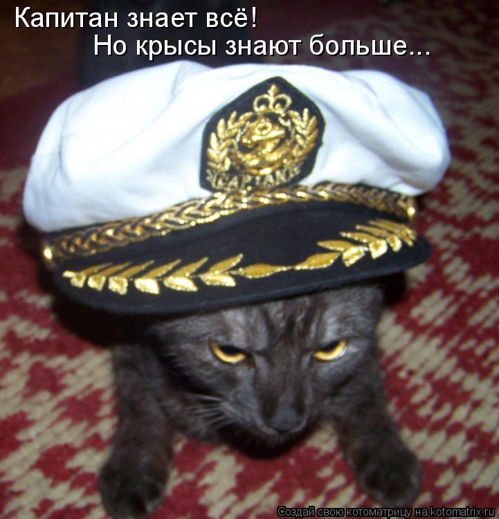 Котоматрица: Капитан знает всё!  Но крысы знают больше...