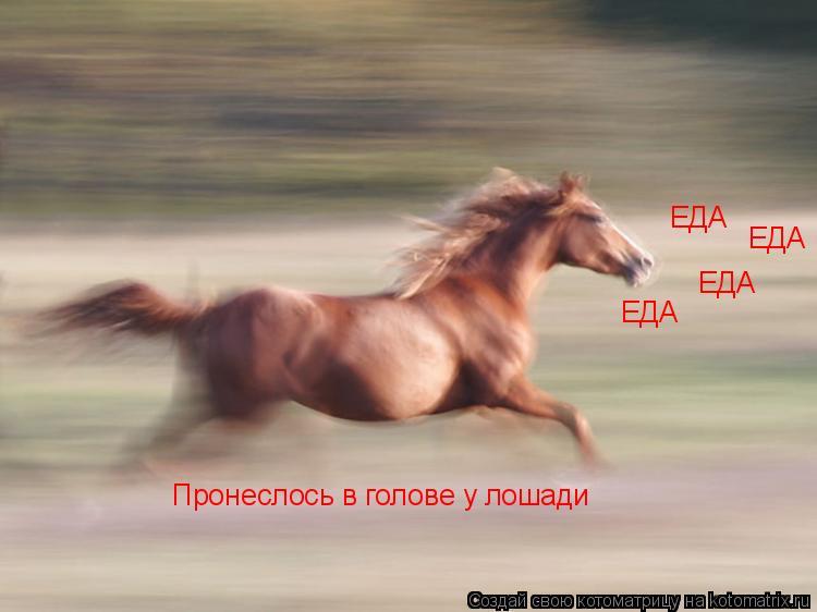 Котоматрица: ЕДА ЕДА ЕДА ЕДА Пронеслось в голове у лошади
