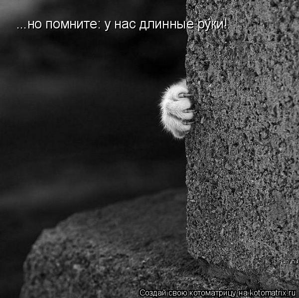 Котоматрица: ...но помните: у нас длинные руки!