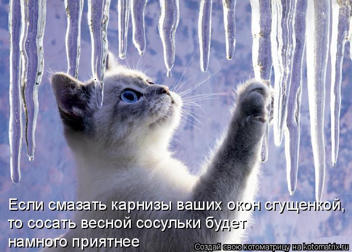 Котоматрица: Если смазать карнизы ваших окон сгущенкой,  то сосать весной сосульки будет  намного приятнее