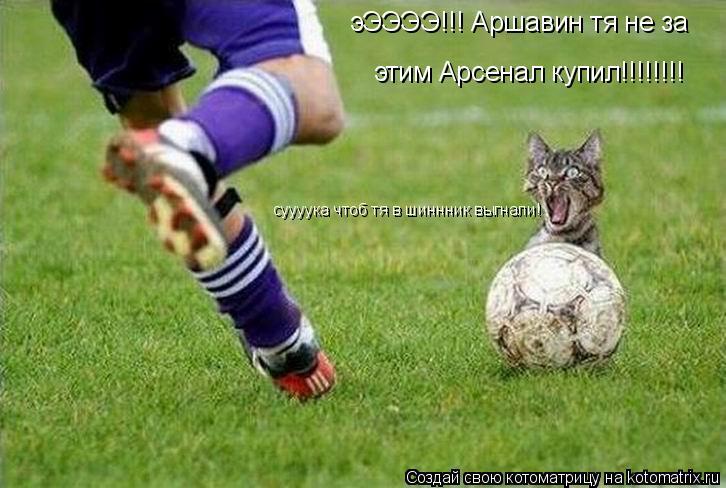 Котоматрица: эЭЭЭЭ!!! Аршавин тя не за этим Арсенал купил!!!!!!!! суууука чтоб тя в шиннник выгнали!