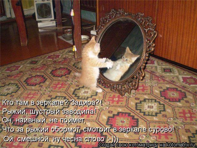 Котоматрица: Кто там в зеркале? Задира?!  Рыжий, шустрый заводила! Он, наивный, не поймет, Что за рыжий обормот, смотрит в зеркале сурово! Ой, смешной, ну чес