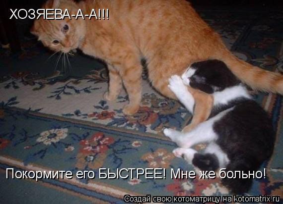 Котоматрица: ХОЗЯЕВА-А-А!!! Покормите его БЫСТРЕЕ! Мне же больно!