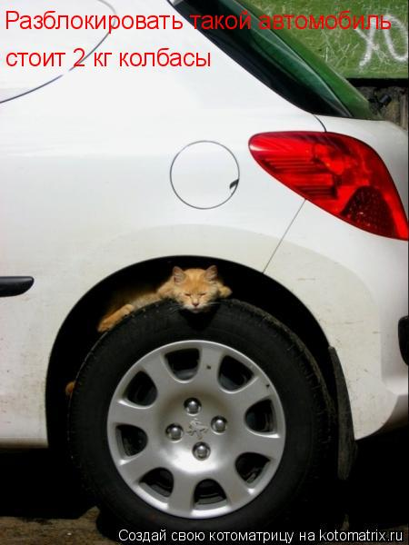 Котоматрица: Разблокировать такой автомобиль стоит 2 кг колбасы