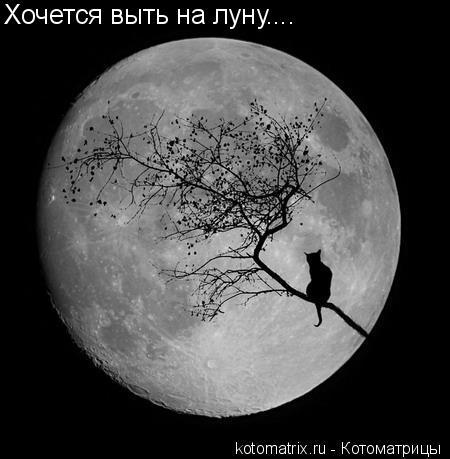 Котоматрица: Хочется выть на луну....