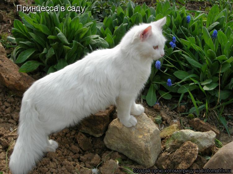 Котоматрица: Принцесса в саду