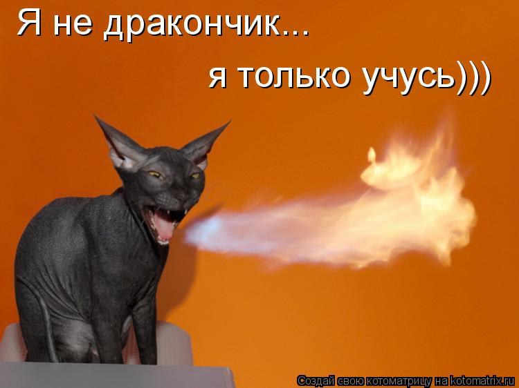 Котоматрица: Я не дракончик...  я только учусь)))
