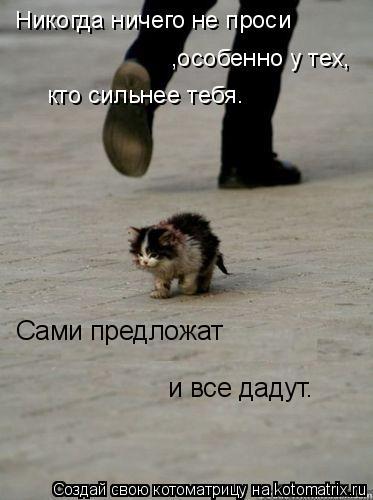 Котоматрица: Никогда ничего не проси ,особенно у тех, кто сильнее тебя. Сами предложат  и все дадут.
