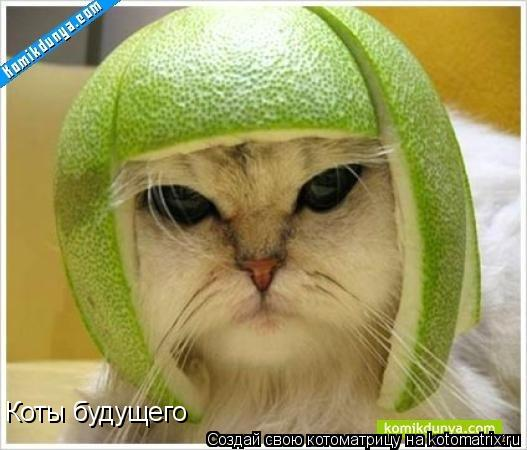 Котоматрица: Коты будущего