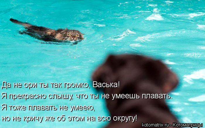 Котоматрица: Да не ори ты так громко, Васька! Я прекрасно слышу, что ты не умеешь плавать. Я тоже плавать не умеею,  но не кричу же об этом на всю округу!