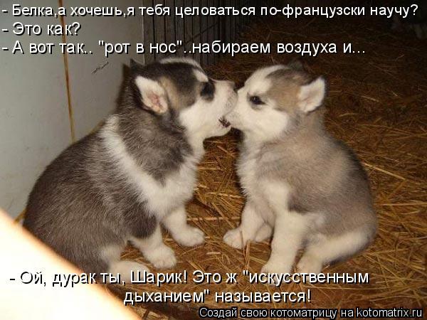 картинки целовать тебя хочу
