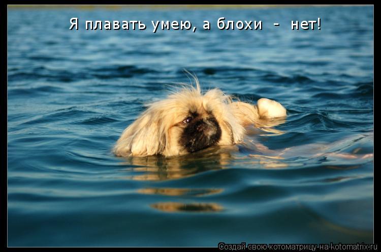 Котоматрица: Я плавать умею, а блохи  -  нет!