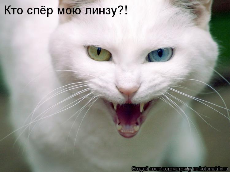Котоматрица: Кто спёр мою линзу?!