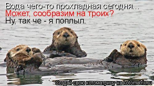Котоматрица: Вода чего-то прохладная сегодня... Может, сообразим на троих? Ну, так че - я поплыл.