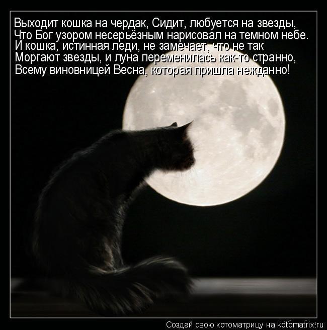 Котоматрица: Выходит кошка на чердак, Сидит, любуется на звезды, Что Бог узором несерьёзным нарисовал на темном небе. И кошка, истинная леди, не замечает,