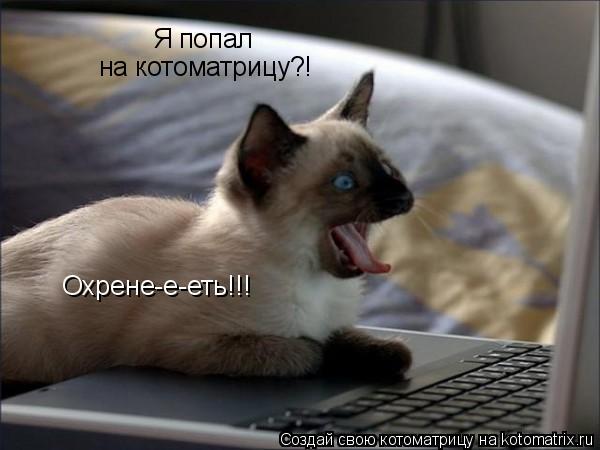 Котоматрица: Я попал на котоматрицу?! Охрене-е-еть!!!